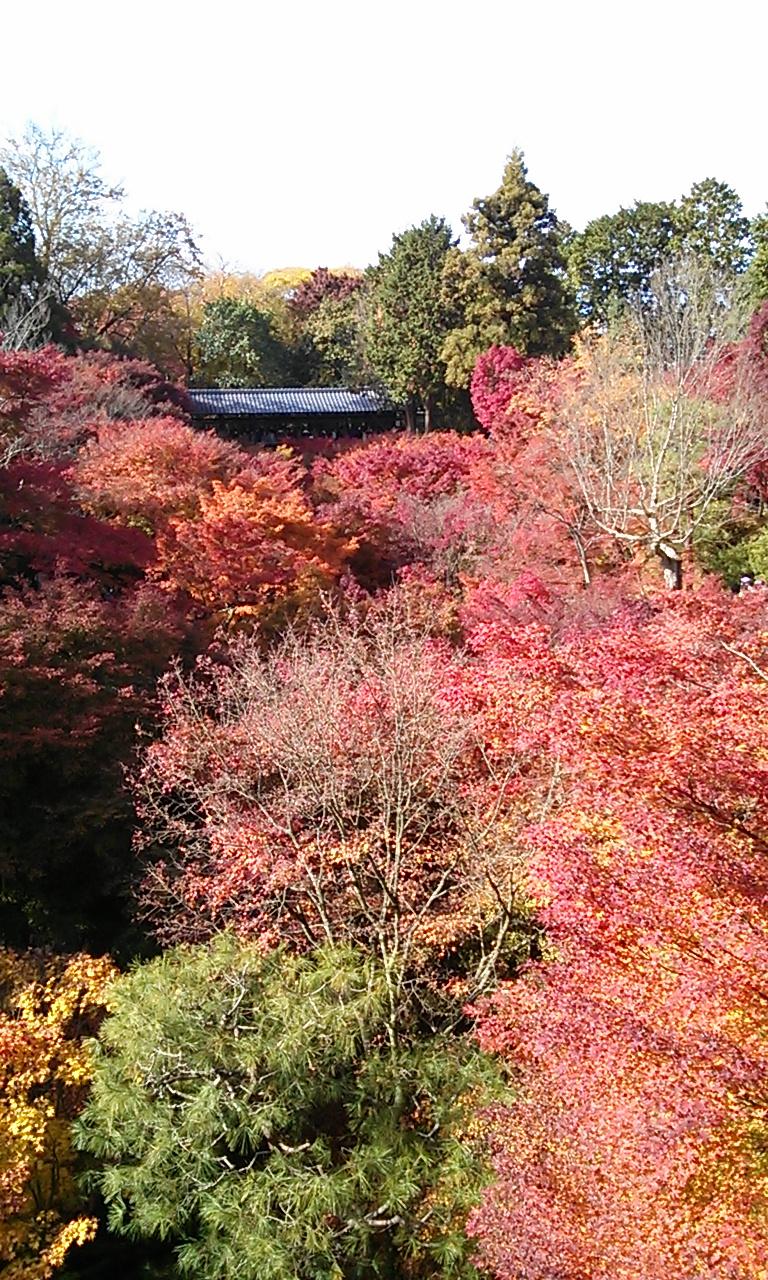 東福寺の橋